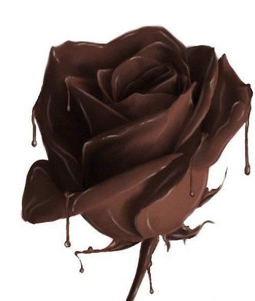 chocolate-rose-bailey-reed