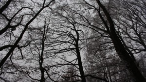 forest-1158758_960_720