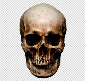 step01_isolating_the_skull_d